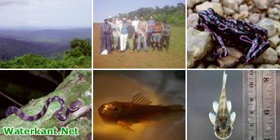Nieuwe diersoorten in regenwoud Suriname