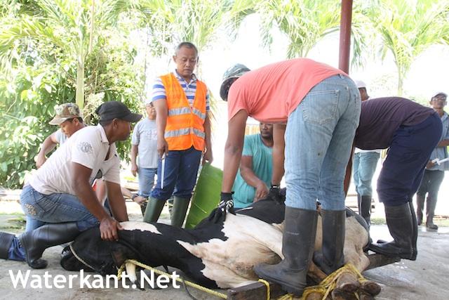 Islamitisch Offerfeest nationale vrije dag in Suriname op 22 augustus