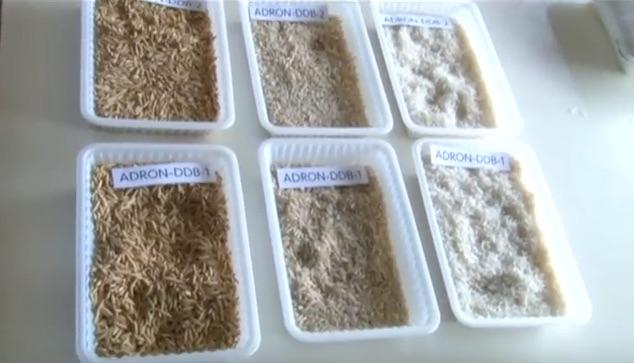 Nieuwe rijstvariëteiten vernoemd naar president Suriname