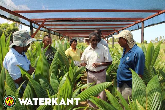 Ontwikkeling kokoskwekerijen in Suriname