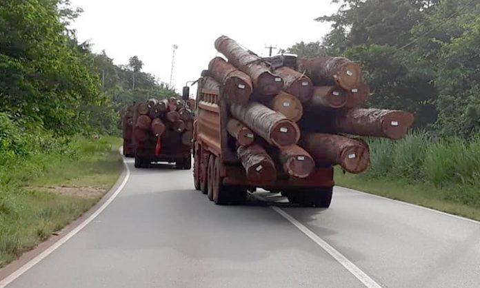 Politie Suriname voert controle op zwaar beladen houttrucks op