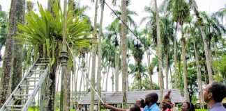 Rehabilitatie van de Palmentuin in Suriname