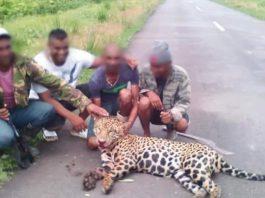 Woede om mannen die trots met dode Jaguar poseren in Suriname