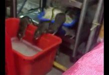 Restaurant Chi Min in Suriname ten onrechte in verband gebracht met ratten filmpje