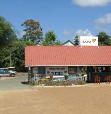 Geslaagde fundraising voor Paramaribo ZOO in Suriname