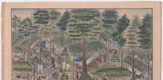 Onbekende tekeningen uit 18e-eeuws Suriname ontdekt