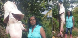 Surinaamse vrouw vangt super grote vis in Saramacca