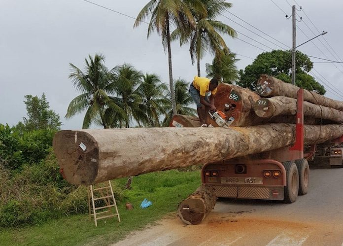 Politie Suriname pakt verkeerd transport van boomstammen aan