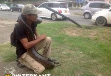 Man geeft show met twee meter lange anaconda