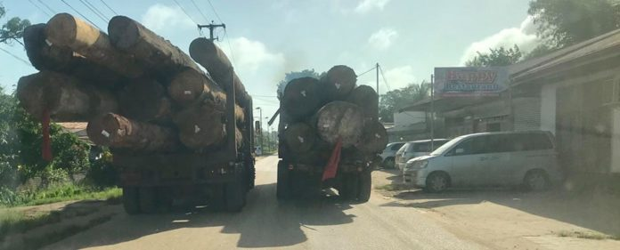 Regering Suriname wil verbod op transport boomstammen over de weg