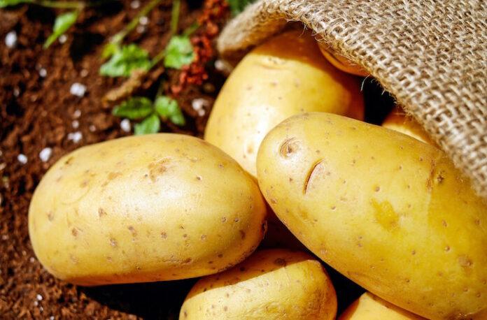 Aardappelen in Suriname zo goed als op