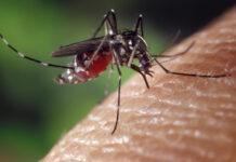 Eerste geval van Dengue in Suriname; overheid geeft 'Dengue alert'