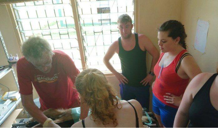 Nederlandse dierenarts in Suriname om honden te steriliseren