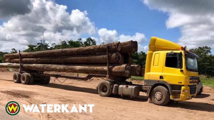 'Commerciële houtkap is slecht voor Suriname'