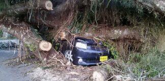 Auto nog steeds bedolven onder resten omgevallen boom in Suriname