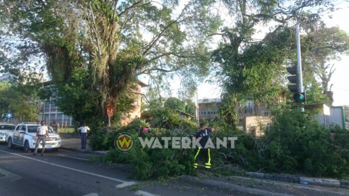 Deel van een boom op wegdek terecht gekomen in Suriname