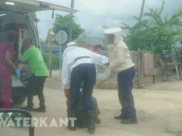 Man in Suriname tijdens werkzaamheden aangevallen door Braziliaanse bijen
