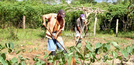 'Verscherpte EU maatregelen voor import van groente en fruit raken Suriname'