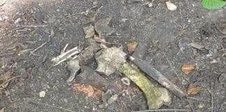 Bijzondere archeologische vondst gedaan in Suriname