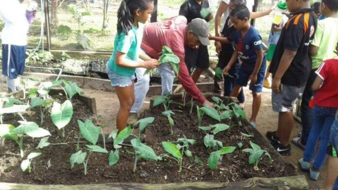 LVV geeft hulp aan Mytylschool en O.S. Kampong Baru voor het aanleggen van moestuinen