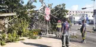 Opnieuw deel van boom omgevallen aan de Dr. Sophie Redmondstraat