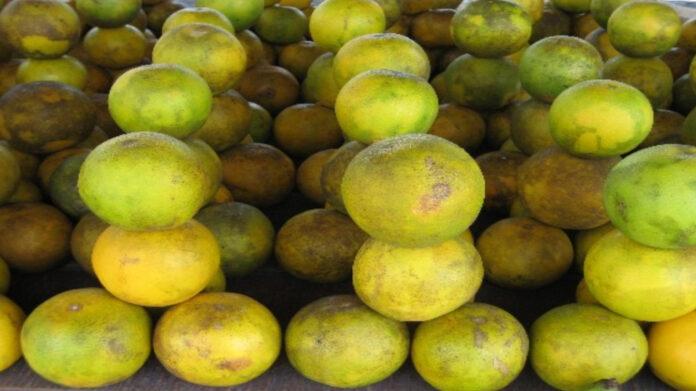 sinaas-appels-suriname