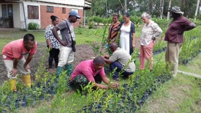 Personeel LVV-Marowijne leert plantvermeerderingstechnieken