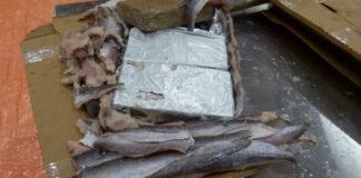 Record hoeveelheid cocaïne onderschept in havens Rotterdam en Antwerpen