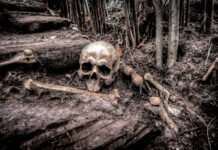 Politie neemt op terrein aangetroffen skelet in beslag