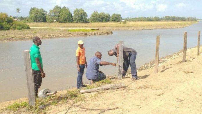 Vernielde omrastering zeedijk Coronie hersteld