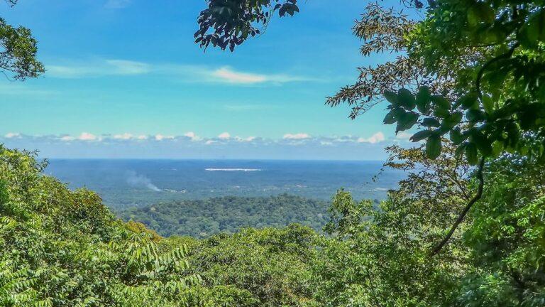 Suriname streeft naar duurzame bosexploitatie