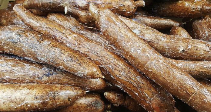 Suriname potentieel grote leverancier cassave aan Europa