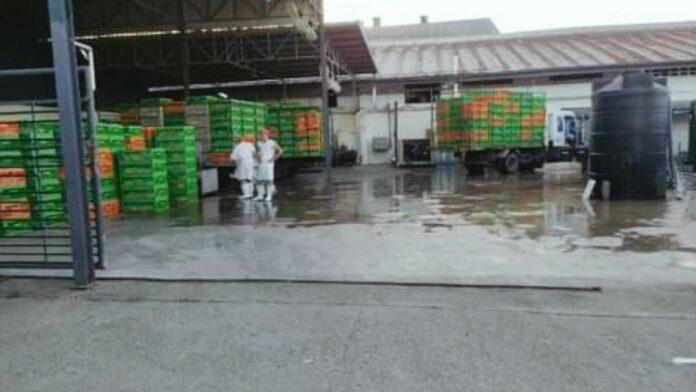 Eerste fase pluimveekeuring in Suriname afgerond