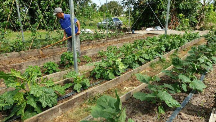 Huize Sukh Dhaam schenkt groenten uit eigen plantenkas