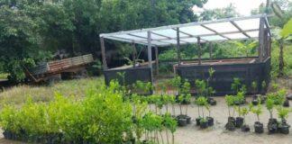 Training plantvermeerdering voor bewoners Nickerie