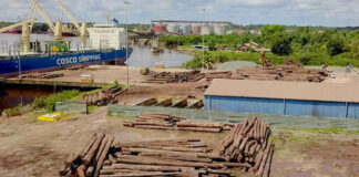 Milieu activist kritisch over uitbaggeren: 'Enige reden is om bossen leeg te roven'