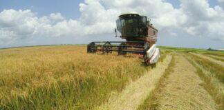 LVV streeft naar verhoging van rijstproductie per hectare
