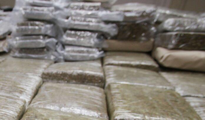Politie onderschept 31 kg marihuana in Nickerie