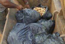 Bende die duizenden schildpadden eieren illegaal raapte aangehouden