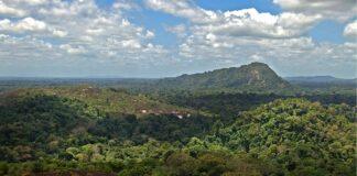 Overheid: 'Geen verkoop Centraal Suriname Natuur Reservaat'