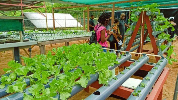 Grote belangstelling voor rondleidingen in plantenkassen LVV