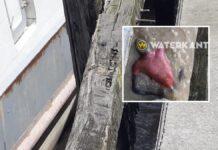 Lijk in water bij sluis Anton Dragtenweg aangetroffen