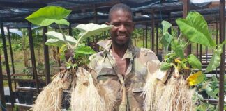 Mini Farms het (r)emigratie instrument voor Suriname