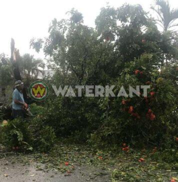 Boom gevallen op wegdek door onweer in Suriname