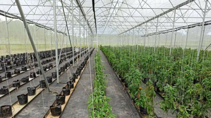 agrarische-sector-suriname