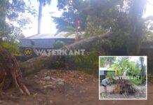 VIDEO: Grote boom valt op woning na rukwind