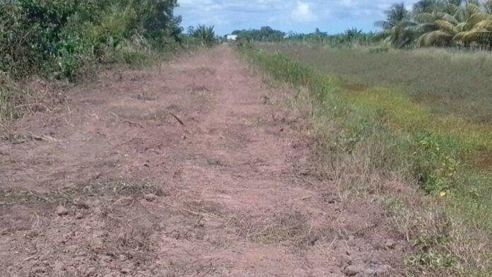 Ontbossing van dichtbegroeide Leiding 4 en 4A weg