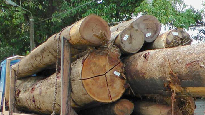 62-jarige Chinese houthakker dood nadat boom op zijn hoofd valt