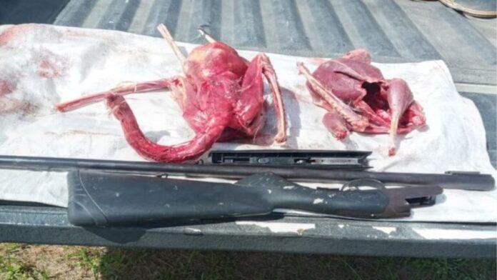 Doodgeschoten beschermde ooievaars in beslag genomen