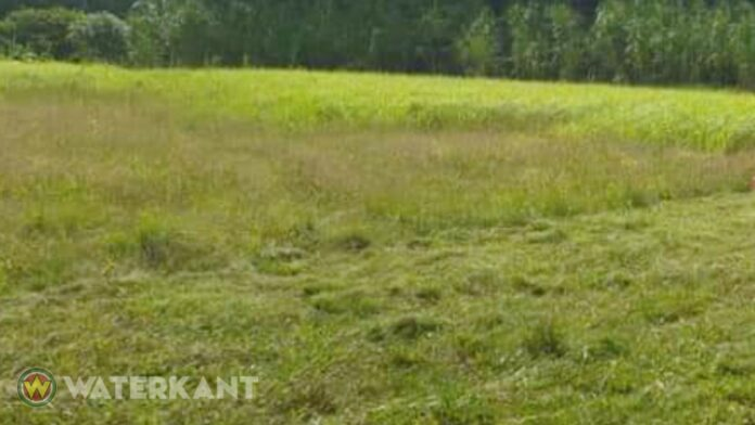 gras-maaien-terrein-suriname